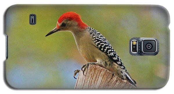 Galaxy S5 Case featuring the digital art 1- Woodpecker by Joseph Keane
