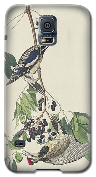 Yellow-bellied Woodpecker Galaxy S5 Case