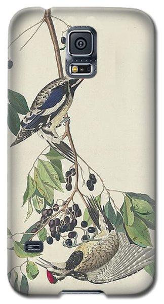 Yellow-bellied Woodpecker Galaxy S5 Case