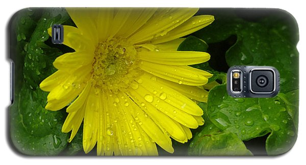 Yellow Gerbera Daisy  Galaxy S5 Case