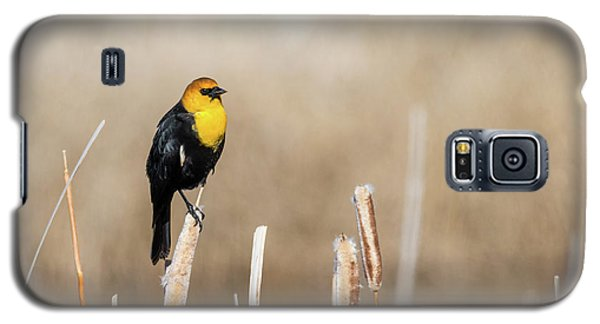 Yellow Headed Blackbird Galaxy S5 Case