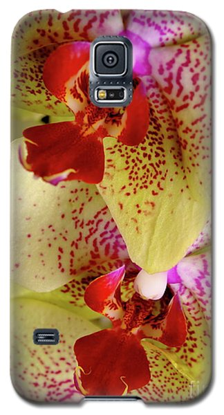 Galaxy S5 Case featuring the photograph Yellow Orchid by Dariusz Gudowicz