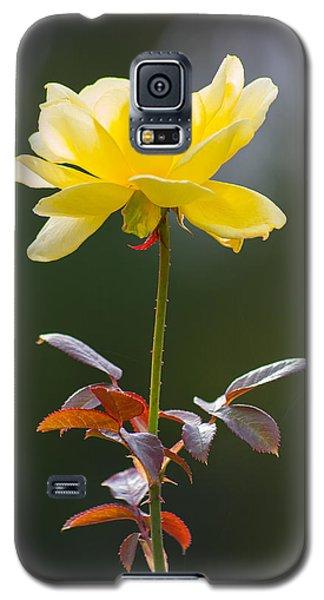 Yellow Rose Galaxy S5 Case