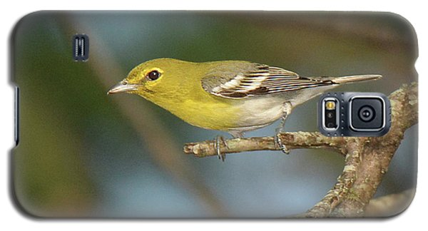 Yellow-throated Vireo Galaxy S5 Case by Alan Lenk