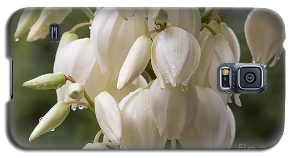 Yucca Plant In Bloom Galaxy S5 Case by Kevin McCarthy
