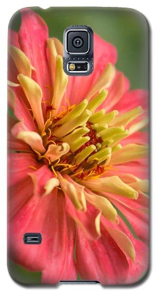 Zinnia Galaxy S5 Case by Jim Hughes