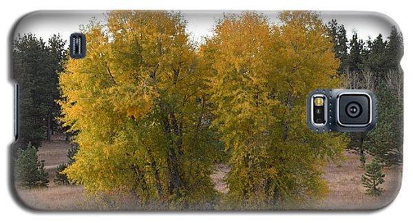 Aspen Trees In The Fall Co Galaxy S5 Case