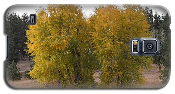 Aspen Trees In The Fall Co Galaxy S5 Case