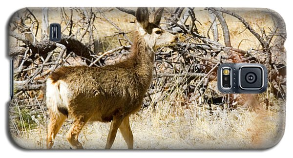 Mule Deer In The Pike National Forest Galaxy S5 Case