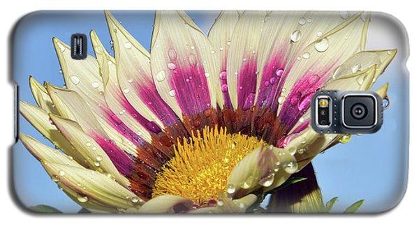 Nice Gazania Galaxy S5 Case by Elvira Ladocki