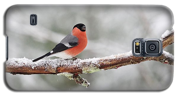 Eurasian Bullfinch Galaxy S5 Case