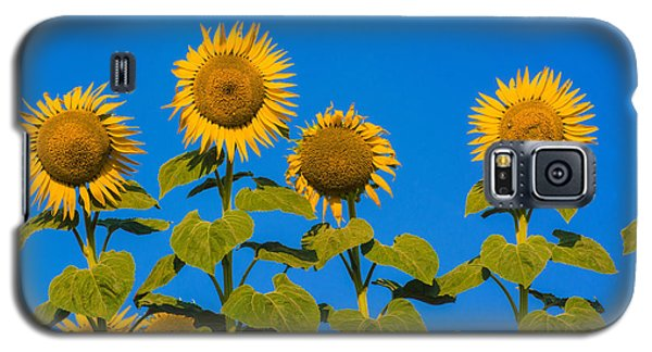 Sunflower Galaxy S5 Case - Field Of Sunflowers by Bernard Jaubert