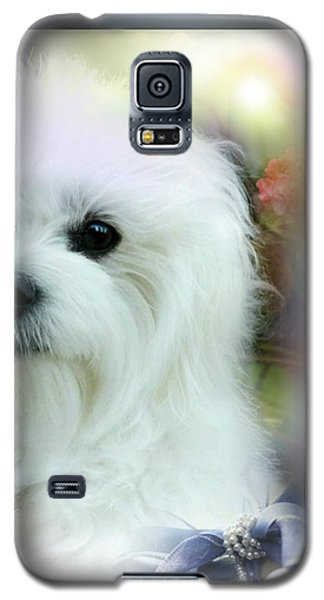 Hermes The Maltese Galaxy S5 Case