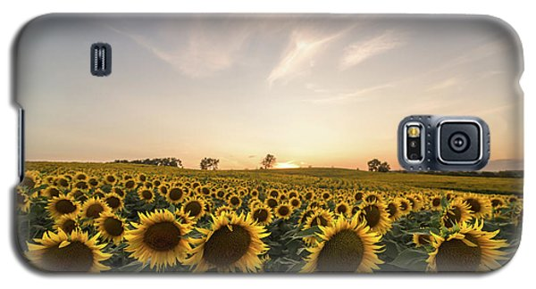 Sunflower Sunset Galaxy S5 Case