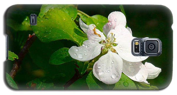 Galaxy S5 Case featuring the painting Apple Blossoms by Johanna Bruwer