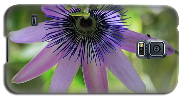 Purple Passiflora Galaxy S5 Case