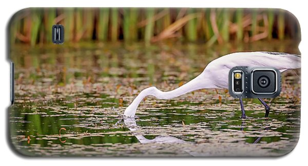 White, Great Egret Galaxy S5 Case