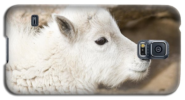Baby Mountain Goats On Mount Evans Galaxy S5 Case