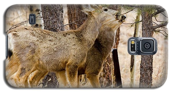 Mule Deer In The Pike National Forest Of Colorado Galaxy S5 Case