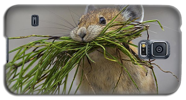 Pika With A Mouthful  Galaxy S5 Case
