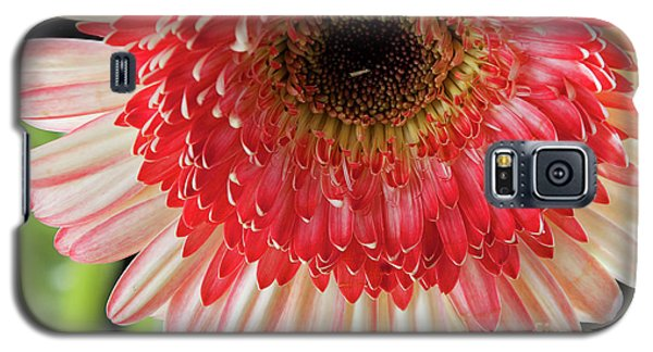 Nice Gerber Galaxy S5 Case