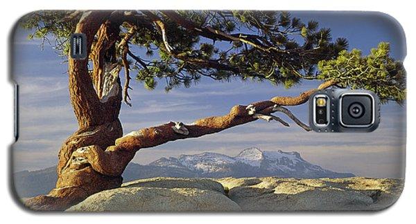 1m6701 Historic Jeffrey Pine Sentinel Dome Yosemite Galaxy S5 Case