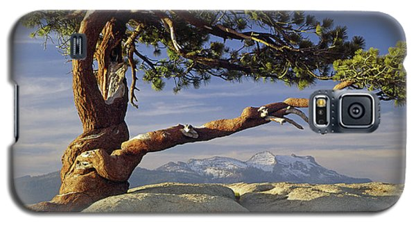 1m6701 Historic Jeffrey Pine Sentinel Dome Yosemite Galaxy S5 Case