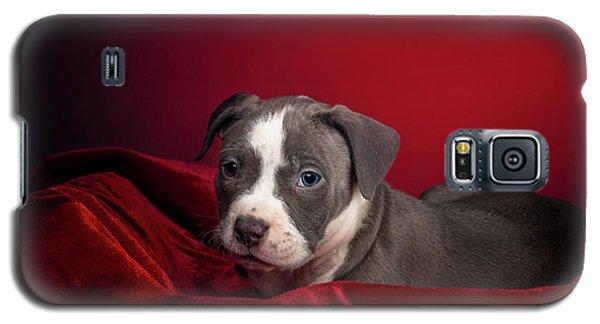 American Pitbull Puppy Galaxy S5 Case