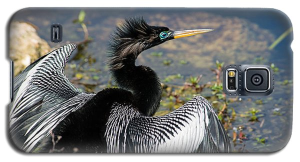 Anhiinga Galaxy S5 Case by Carol Ailles