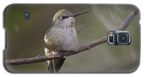Anna's Hummingbird Galaxy S5 Case
