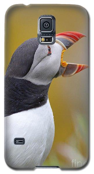 Atlantic Puffin - Scotland Galaxy S5 Case