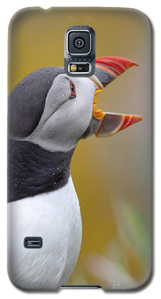 Atlantic Puffin - Scotland Galaxy S5 Case
