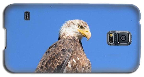 Bald Eagle Juvenile Perched Galaxy S5 Case