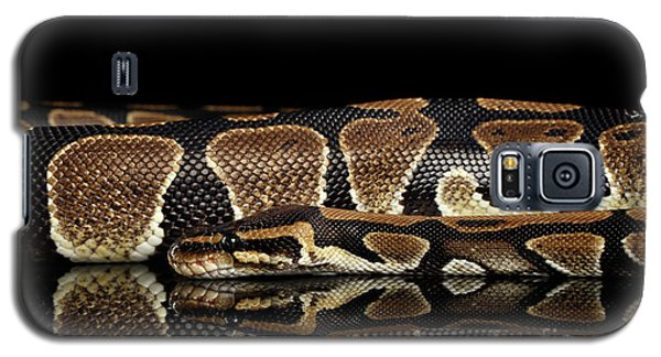 Ball Or Royal Python Snake On Isolated Black Background Galaxy S5 Case
