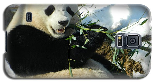 Bao Bao Sittin' In The Snow Taking A Bite Out Of Bamboo1 Galaxy S5 Case by Emmy Marie Vickers