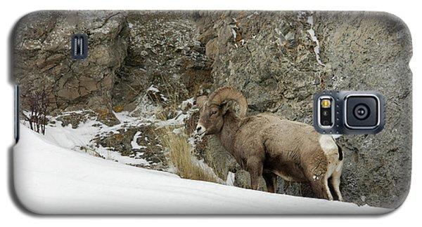 Bighorn Galaxy S5 Case