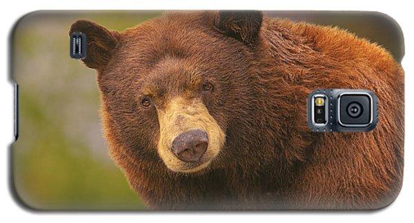 Black Bear Galaxy S5 Case by Brian Cross