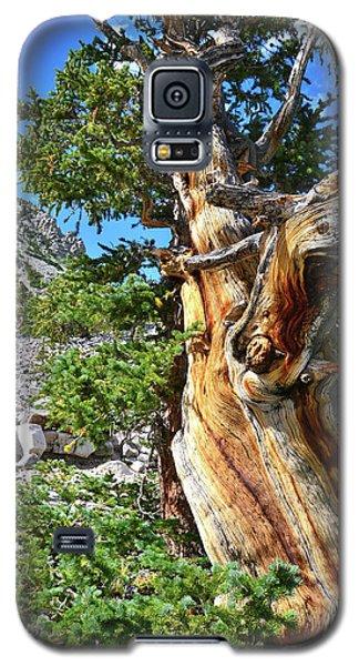 Bristlecone Loop Trail Galaxy S5 Case