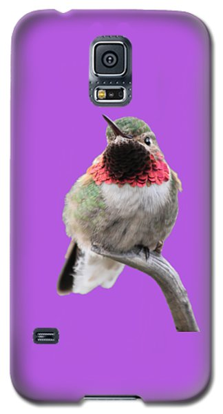 Broad-tailed Hummingbird Galaxy S5 Case