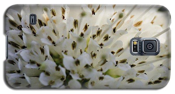 Buttom Bush Galaxy S5 Case
