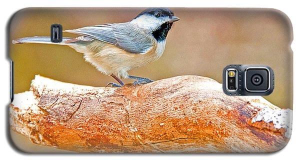 Galaxy S5 Case featuring the photograph Carolina Chickadee On Tree Limb by A Gurmankin