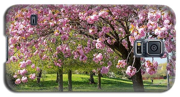 Cherry Blossom Tree Galaxy S5 Case