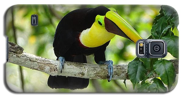 Chestnut-mandibled Toucan Galaxy S5 Case