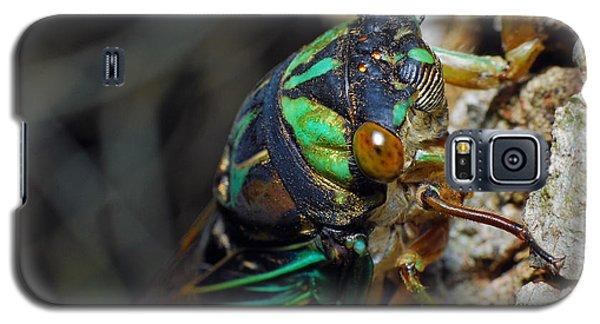Cicada Galaxy S5 Case