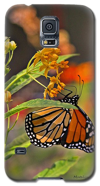 Clinging Butterfly Galaxy S5 Case