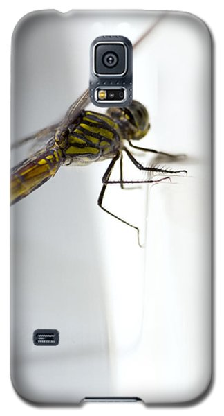 Close Up Shoot Of A Anisoptera Dragonfly Galaxy S5 Case