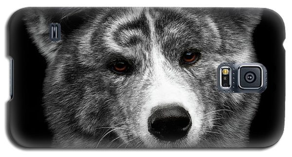 Closeup Portrait Of Akita Inu Dog On Isolated Black Background Galaxy S5 Case