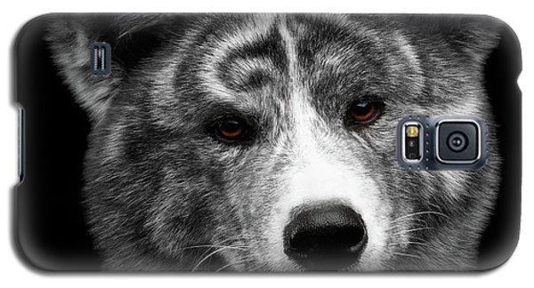 Dog Galaxy S5 Case - Closeup Portrait Of Akita Inu Dog On Isolated Black Background by Sergey Taran