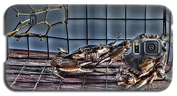 2 Crabs In Trap Galaxy S5 Case