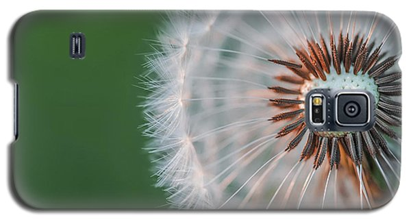 Galaxy S5 Case featuring the photograph Dandelion by Bess Hamiti